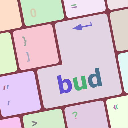 bud: button with bud word on computer keyboard keys vector illustration