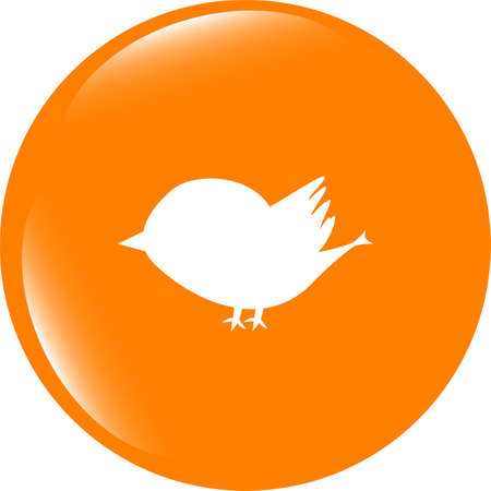 Glossy isolated website and internet web icon with bird symbol