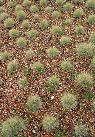 clump: Garden clump decorative grass. Stock Photo