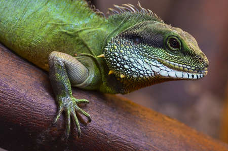 Close up of the lizard on the tree Stock Photo - 13854168