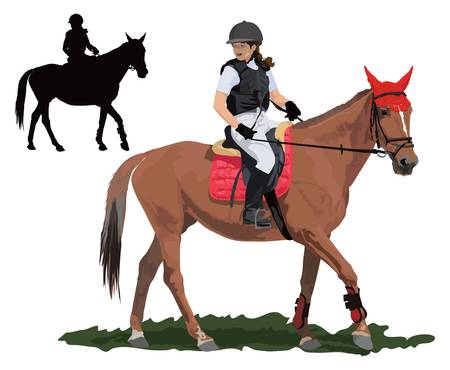 Brown race horse and lady jockey in uniform. Detailed color illustration. Vector