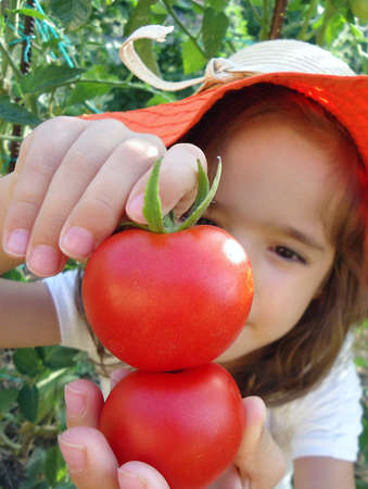 Little girl playing with tomatoes in organic garden