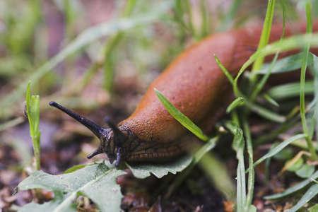 tardy: slug