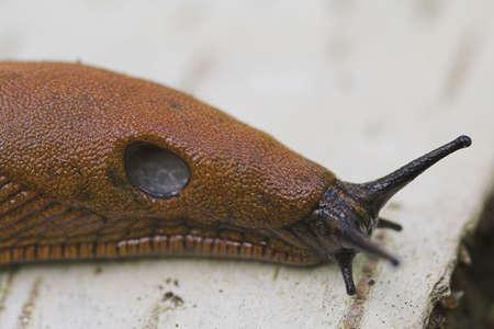 slug: slug