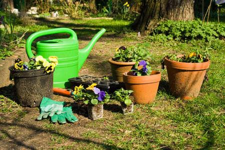 dibble: gardening