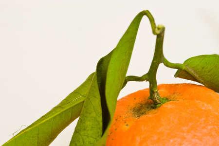 citrus aurantium: tangerine