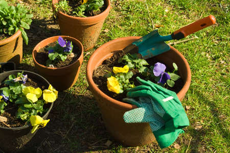 dibble: planting