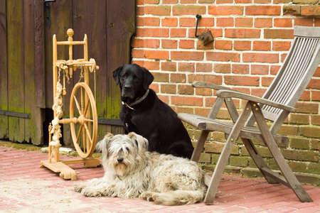 spinning wheel with two dogs photo