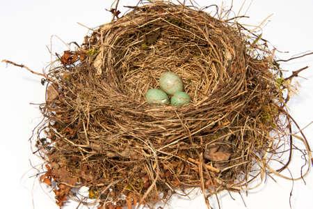 bird's nest of a blackbird Stock Photo