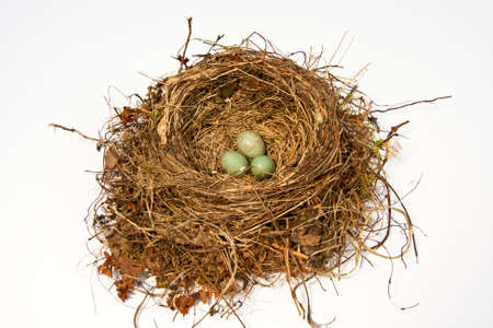 birds nest of a blackbird photo