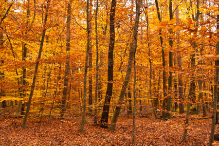 Forest in autumn Stock Photo - 9493393