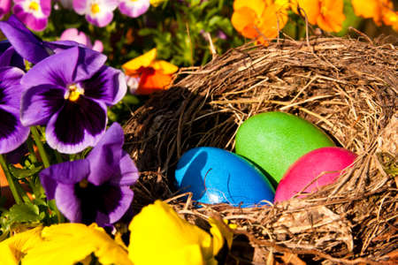 easter eggs in a nest in a garden photo