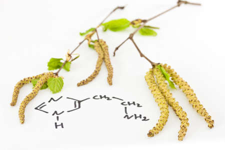 Allergic rhinitis with birch blossom Stock Photo - 13508395