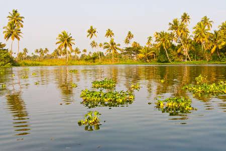 backwaters: Backwaters in Kerala, India