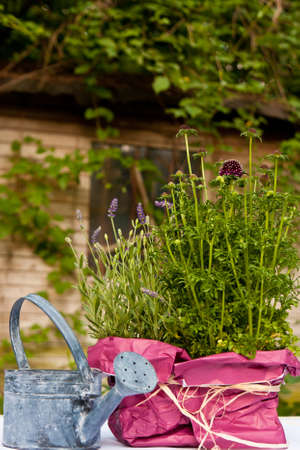 watering pot: Flowers and watering pot in a garden