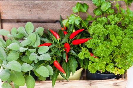 mild: Parsley, salvia and mild pepper