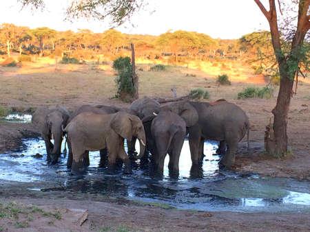 waterhole: African Elephants at a Waterhole