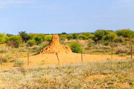 Termite mound in Namibia, Africa