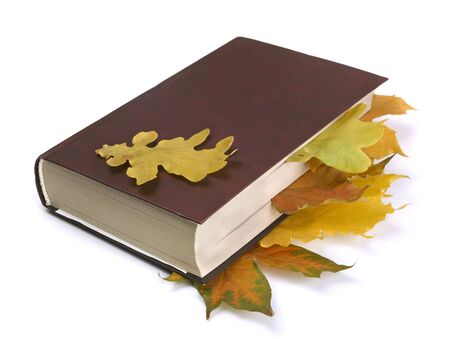 Maple and oak autumn  leaves in the book isolated on white photo