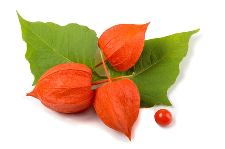 Physalis (Physalis alkekengi) flower and leaves isolated on white Stock Photo - 10551814