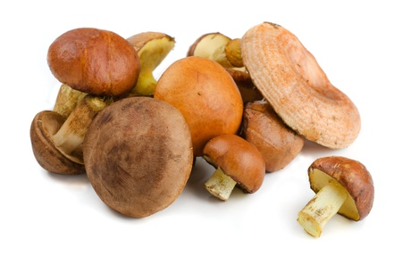 edible plant: Various wild forest mushrooms isolated on white