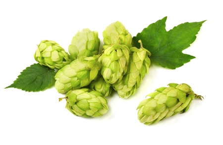 lupulus: Pile of green hop cones isolated on white