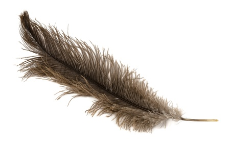 Large brown ostrich feather isolated on white Stock Photo - 16245720