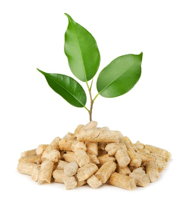 pellets: Young plant growing out of wood pellets isolated on white