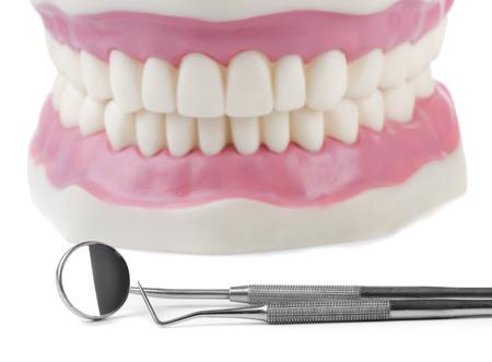 dentadura postiza: Anat�mico modelo de los dientes y herramientas dentales
