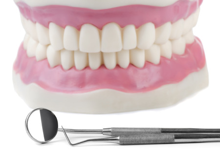 Anatomical teeth model and dental tools photo