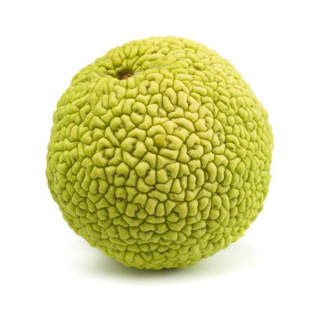 hedgeapple: Osage orange (maclura pomifera)  isolated on white