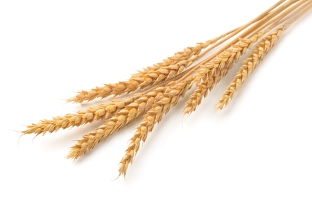 husk: Ripe  wheat ears isolated on white