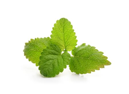 Fresh balm mint leaves isolated on white