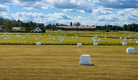 Landscape with hay bales in  plastic wrap on summer field Stock Photo