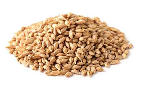Pile of barley seeds isolated on white