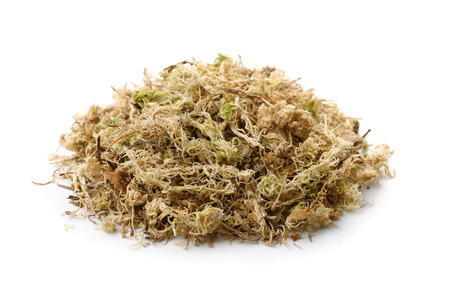 Pile of dry sphagnum moss isolated on white