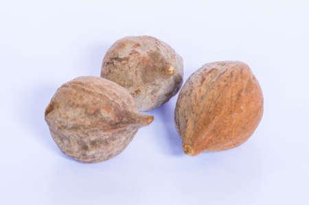 dry fruit: Terminalia bellirica dry fruit Stock Photo