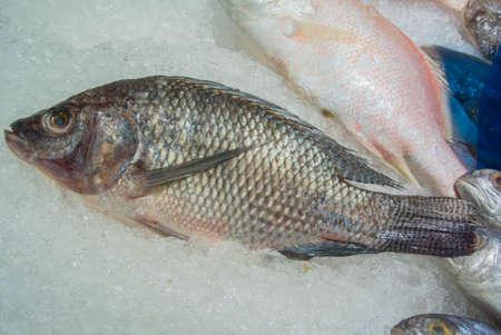 mango fish: tilapia fish or mango fish display on ice