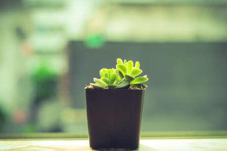 cruel: Flower small Green