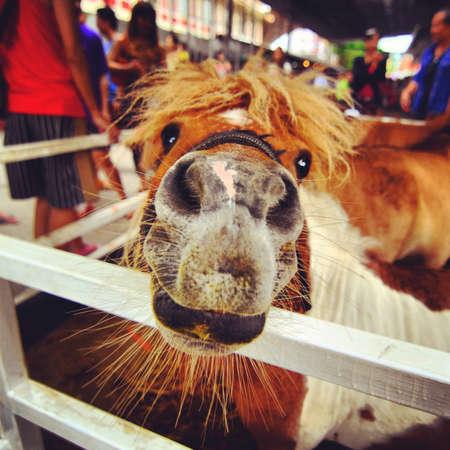 eye: Cute horse Stock Photo