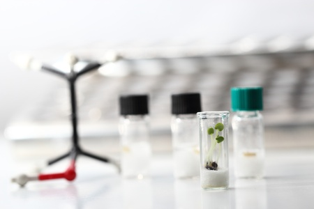 Small plants in test tubes photo