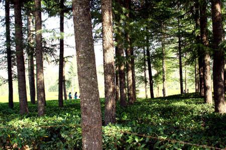 factory farm: Organic tea gardens near Mukhteshwar