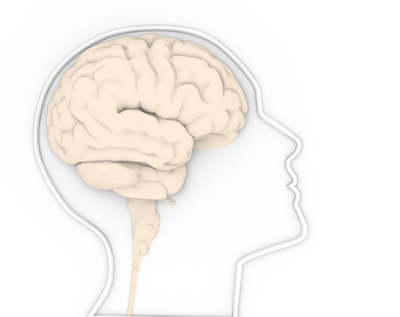 cerebra:  Human head with brain  This is a 3d render illustration