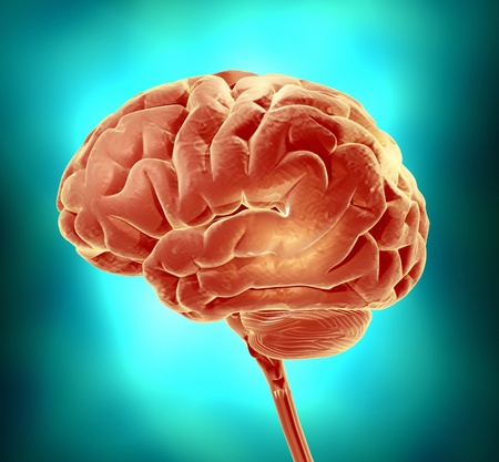 cerebra: Conceptual image of a brain  3d render illustration Stock Photo