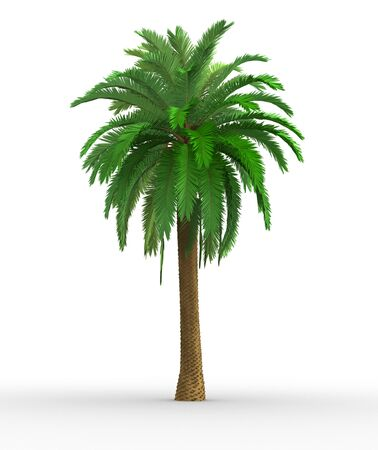 palm tree isolated: Palm-tree on a white background  This is a 3d render illustration
