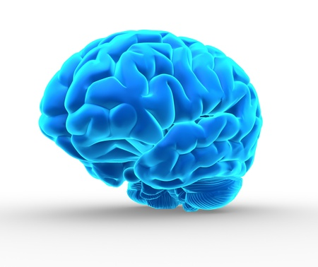 anatomy brain: Conceptual image of a blue brain over white - 3d render