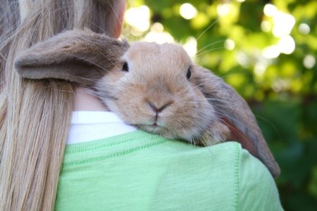 Hase: blond girl with a rabbit, who is looking over her shoulder