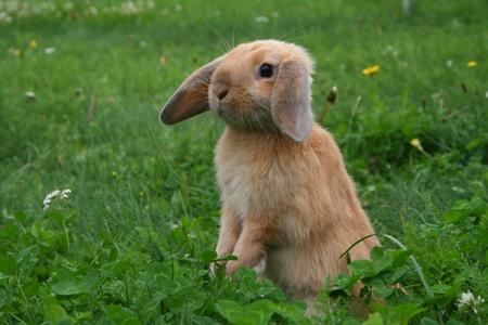 Ostern: little rabbit on a meadow Stock Photo
