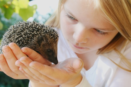 Girl with a hedgehog Stock Photo
