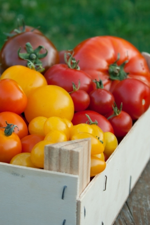 box with different varieties of tomatoes photo